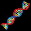 近視の進行予防に「EGR1遺伝子」が関係しているようです。
